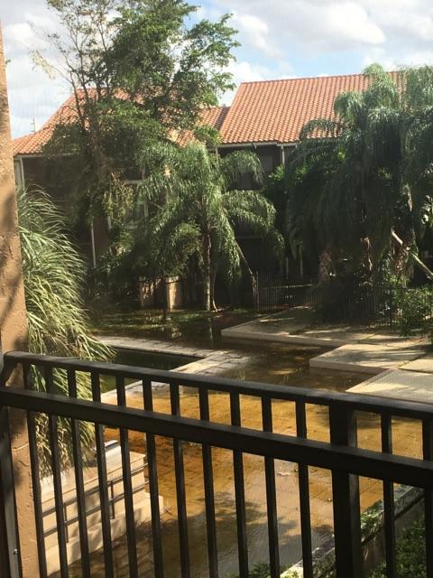 tree in pool
